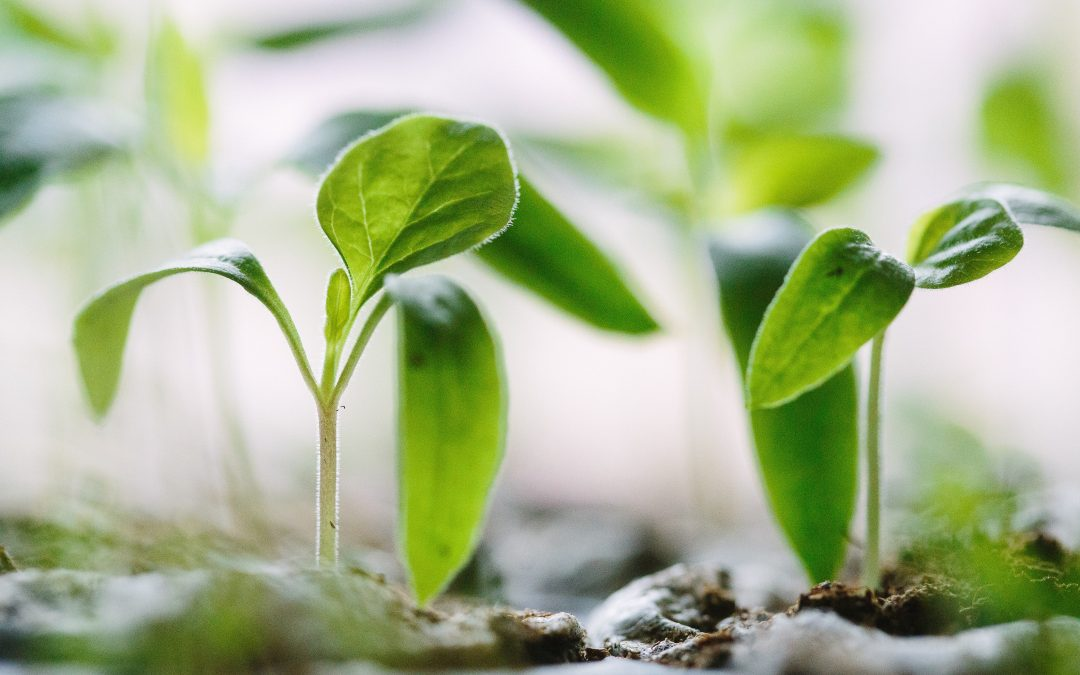Three sure-fire tips to co-operate with your growth!